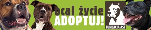 AST - Fundacja na Rzecz Zwierząt Niechcianych