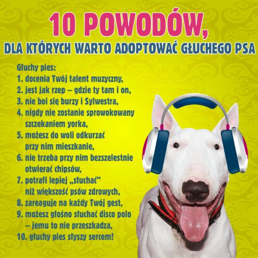 Gluchota psa2
