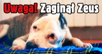 Zeus banerwww